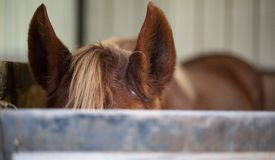 Schöne Pferde in Texas Hill Country stockbild