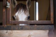 Schöne Pferde in Texas Hill Country lizenzfreie stockfotos
