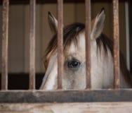 Schöne Pferde in Texas Hill Country stockfotografie