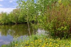 Schöne Picknickplatzlöwenzahnwiese nahe dem Fluss Ein schönes Picknick durch den See Birken und Löwenzahn Lizenzfreies Stockfoto