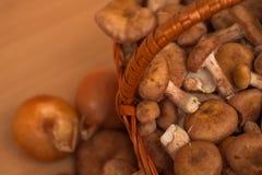 Schöne Pilznahaufnahme stockfotografie