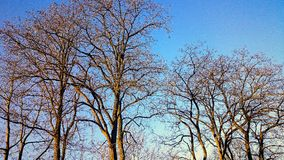 Schöne Plätze in einem Wald Lizenzfreies Stockfoto
