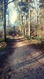 Schöne Plätze in einem Wald Stockbild