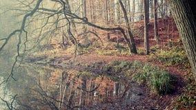 Schöne Plätze in einem Wald Stockfotografie