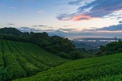 Schöne Plantage des grünen Tees und der Fujisan auf Sonnenaufgang Stockbild