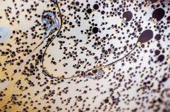 Schöne psychedelische Abstraktion bildete sich durch Licht auf der Oberfläche einer Seifenblase Stockfoto
