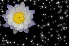 Schöne purpurrot-weiße Lotosblume mit Funkelnstern-Lichtisolator Stockbilder