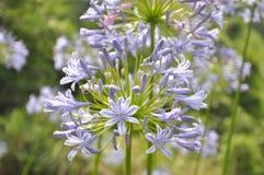 Schöne purpurrote Blume Stockbilder