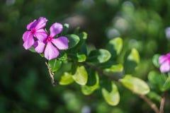 Schöne purpurrote Blume auf erstaunlichem natürlichem grünem bokeh Hintergrund Lizenzfreies Stockfoto