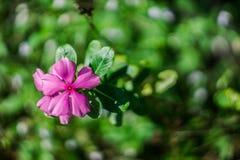 Schöne purpurrote Blume auf erstaunlichem natürlichem grünem bokeh Hintergrund Lizenzfreie Stockfotografie