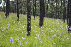 Schöne purpurrote Blumen lizenzfreies stockbild