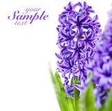 Schöne purpurrote Blumen Stockfotos