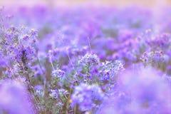 Schöne purpurrote Blumen Stockfoto