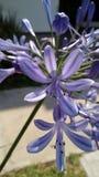 Schöne purpurrote Blumen Stockbild
