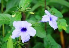Schöne purpurrote Blumen Stockbilder