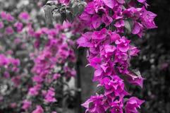 Schöne purpurrote Blumen lizenzfreie stockfotos
