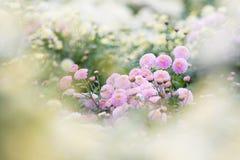 Schöne purpurrote Blumen als Traumhintergrund Stockbilder