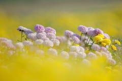 Schöne purpurrote Blumen als Traumhintergrund Stockbild
