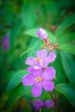 Schöne purpurrote Blumen in der Blüte, Nahaufnahme Stockbilder