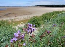 Schöne purpurrote Blumen, Meer und Lagune lizenzfreies stockfoto