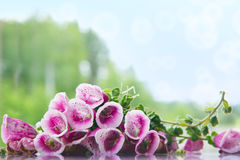 Schöne purpurrote Blumen und Wald Stockbild
