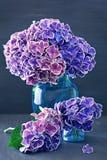 Schöne purpurrote Hortensie blüht Nahaufnahme in einem Vase Stockfotografie