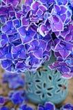 Schöne purpurrote Hortensie Ein schöner Blumenstrauß von Blumen Stockfotografie