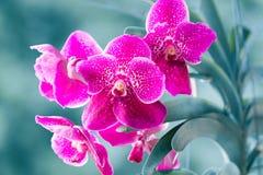 Schöne purpurrote Orchidee lizenzfreie stockfotos