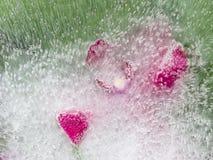 Schöne purpurrote Orchidee der Abstraktion Lizenzfreie Stockfotografie