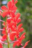 Schöne purpurrote Orchideeblumen Stockbilder