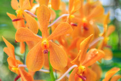 Schöne purpurrote Orchideeblumen Stockfotos