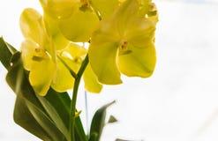 Schöne purpurrote Orchideeblumen Stockfoto