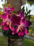 Schöne purpurrote Orchideen unter dem Glättungslicht lizenzfreie stockfotos
