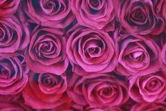 Schöne purpurrote Rosen stockfotografie