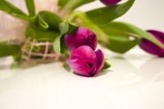 Schöne purpurrote Tulpen mit grünen Blättern Stockfotografie