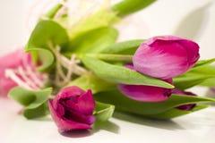 Schöne purpurrote Tulpen mit grünen Blättern Lizenzfreies Stockfoto