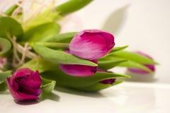 Schöne purpurrote Tulpen mit grünen Blättern Lizenzfreie Stockfotografie