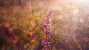 Schöne purpurrote wilde Blume im Regen und im Sonnenuntergang Stockfotografie