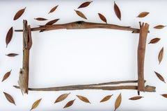 Schöne reale Blätter getrennt auf Weiß Lizenzfreie Stockfotos