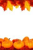 Schöne reale Blätter getrennt auf Weiß Lizenzfreie Stockbilder