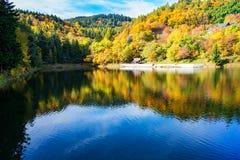 Schöne Reflexion von bunten Bäumen im Wasser von See während des Herbstes lizenzfreies stockfoto