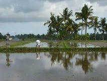 Schöne Reflexion von Palmen im Wasser auf den schönen Reisfeldern bali indonesien Stockfotografie