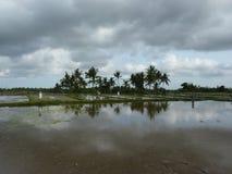 Schöne Reflexion von Palmen im Wasser auf den schönen Reisfeldern bali indonesien Lizenzfreies Stockbild