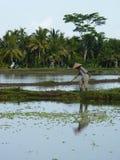 Schöne Reflexion von Palmen und von Landwirt im Wasser auf den schönen Reisfeldern bali indonesien Lizenzfreie Stockfotografie