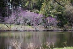 Schöne Reflexionen im See Marmo bei Morton Arboretum im Frühjahr Stockfotos