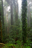 schöne RegenBäume des Waldes stockfotos