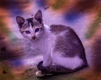 Schöne Regenbogen-Katze lizenzfreie stockfotos