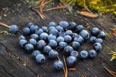 Schöne reife Blaubeeren, die auf einem großen Baumstumpf liegen stockbild