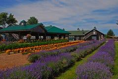 Schöne Reihen von Lavendelanlagen in einem Bauernhof mit Gebäude und Hütte herum lizenzfreies stockbild