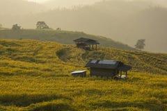 Schöne Reisterrassen Stockfoto